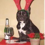 Punky en Navidad